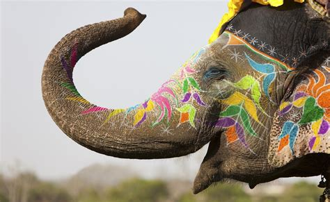 Decorated Elephants by Analysis India S Climate Pledge Suggests Significant