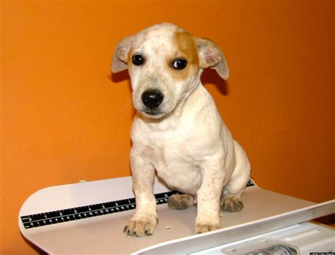 lifeline puppy rescue lifeline puppy rescue has new puppies looking for a home photos huffpost