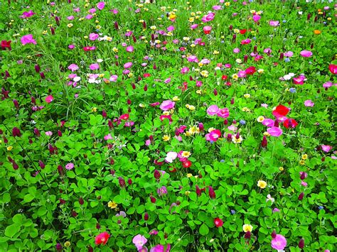 wildflower container garden why you should sow wildflower seeds during winter hgtv