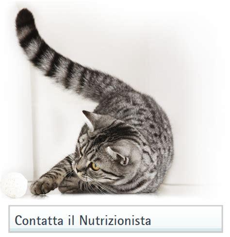 intolleranza alimentare gatto intolleranze alimentari nei gatti sintomi e rimedi