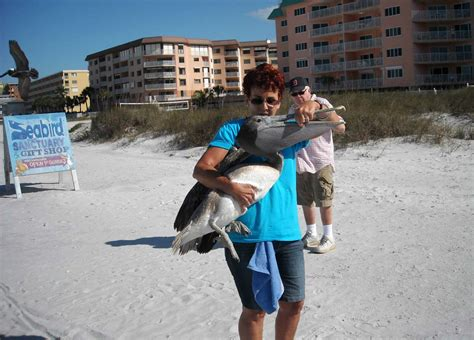 suncoast seabird sanctuary seabird sanctuary in clearwater