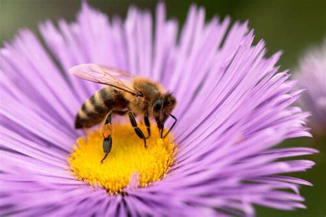 bee pollen good   part