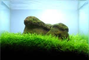 briliant decoration aquascaping tips decosee