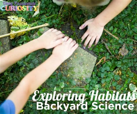 backyard science videos exploring habitats in your backyard only passionate curiosity
