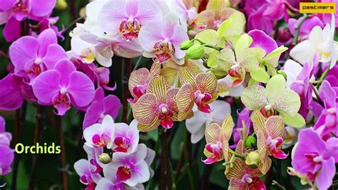 the best flowers aren t always the biggest serenity top 10 list of most beautiful flowers in the world youtube