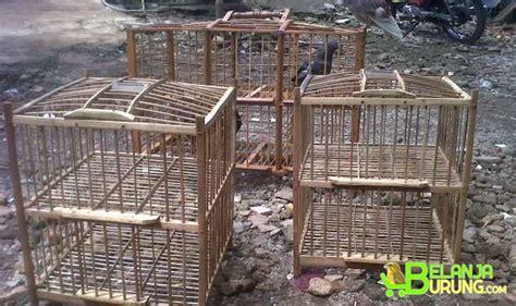 Pakan Burung Perkutut Gold Coin jual kandang merpati belanjaburung