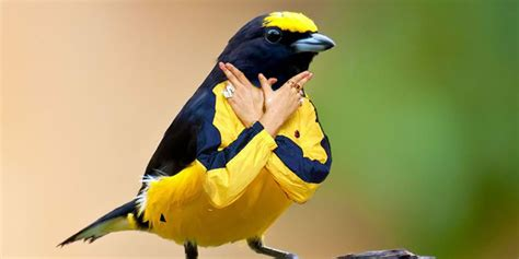 birds with arms because internet