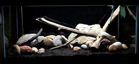 aquascaping tips 5 tips voor een natuurlijker hypnotiserend aquarium aquascaping blog