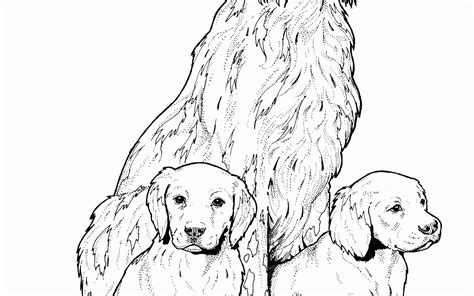 coloring pages of newfoundland brilliant ideas coloring page newfoundland free