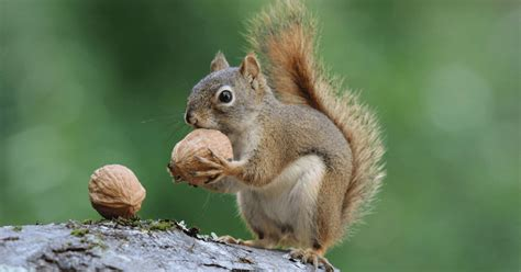 what do squirrels eat in the 28 images what do