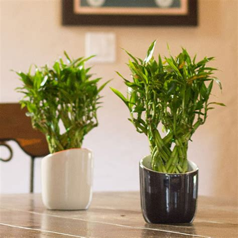 best low light 10 best low light houseplants costa farms