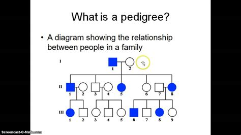 What Is A what is a pedigree