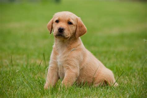 abotonada por su mascota consejos de fotografa perro caracter 237 sticas tipos de perros qu 233 comen d 243 nde