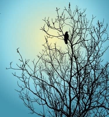 bird in tree art and color pinterest