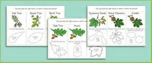 matching leaves and seeds game forest resources