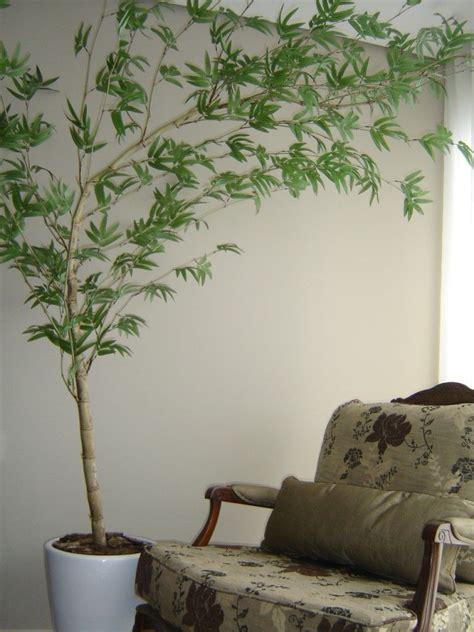 bambu in vaso bambu mosso vaso spa bambu vaso e jardinagem