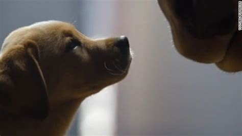 budweiser puppy commercial 2013 budweiser puppy commercial www imgkid the image kid has it