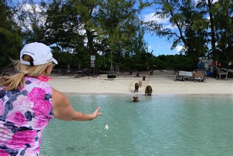 Island Time In Abaco It S My Blog Birthday Party And I - swimming pigs of abaco
