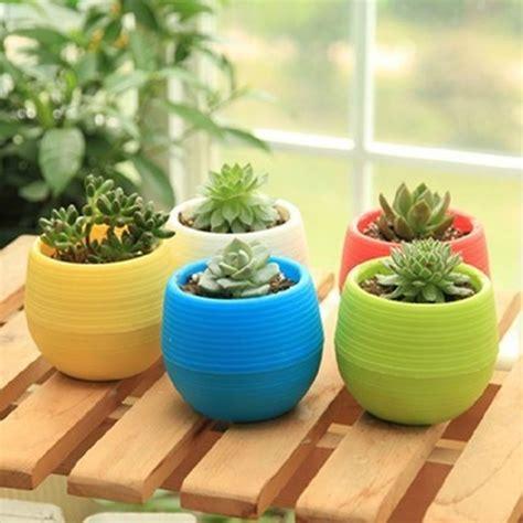jual beli pot bunga kaktus pot tanaman hias diskon
