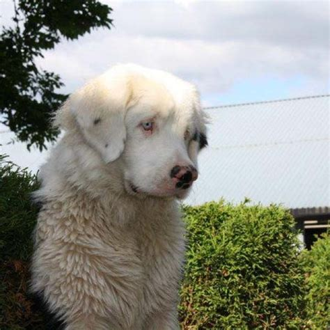rare dog breeds puppies 19 unusual dog breeds and markings will make you fall in love