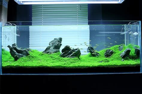 aquarium design in bangladesh 200 best fish tank images on pinterest fish tanks