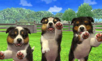 nintendogs and cats golden retriever breeds shetland sheepdog nintendogs wiki fandom powered by wikia