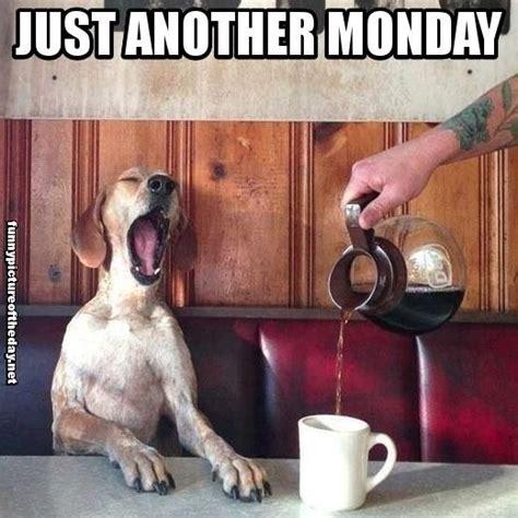 Monday Dog Meme - 23 best images about dog memes on pinterest mondays two