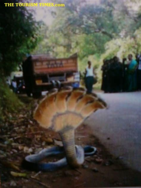 nagarjuna sagar to srisailam by boat cost seven headed snake in srisailam tourism times call