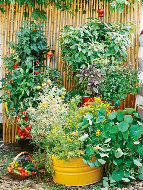 container vegetable gardening tips how to make a small vegetable garden home designs project