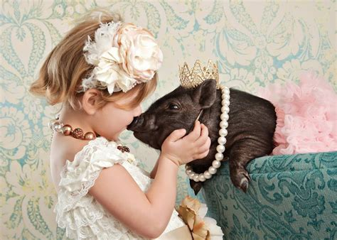 how do yorkies live on average teacup pig micro pigs teacup pigs for sale
