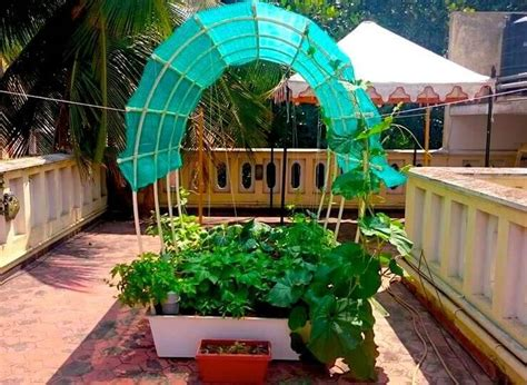 Terrace Kitchen Garden by Smart Gardens Complete Kits For Organic Terrace Kitchen