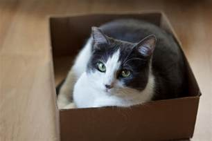 why cats love to sit on squares pbs newshour