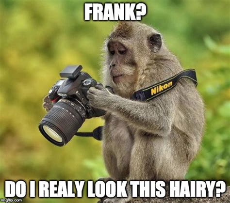 Baby Monkey Meme - funny baby monkey hot girls wallpaper