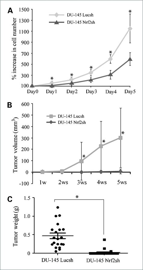 bcas2 promotes prostate cancer cells proliferation by loss of kelch like ech associated protein 1 function in