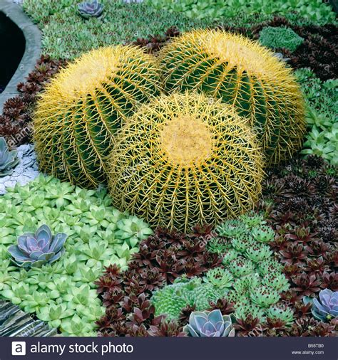 cactus rock garden cactus and succulents in rock garden stock photo royalty