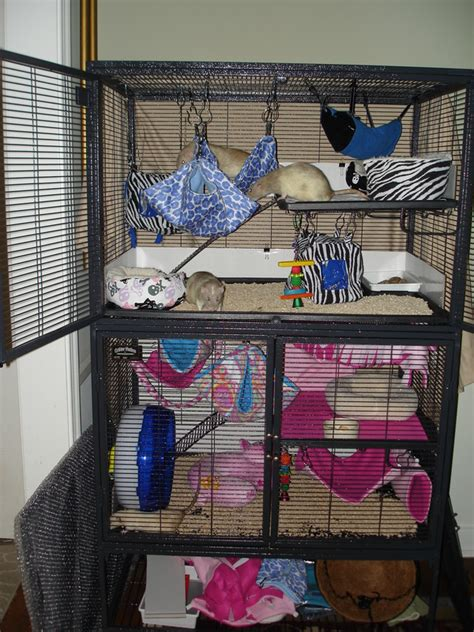 rat bedding cages and bedding rockabye rattery