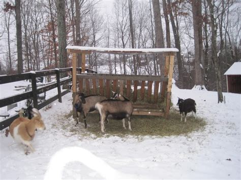 Goat Hay Rack Feeder by Pin By Tami Sweet On Goats