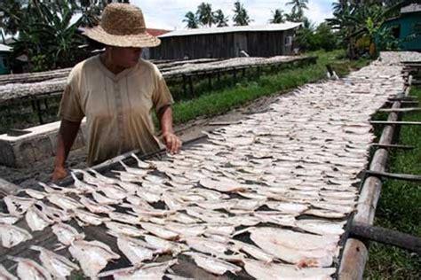 Makanan Ikan Nila Hias ikan hias foto ikan