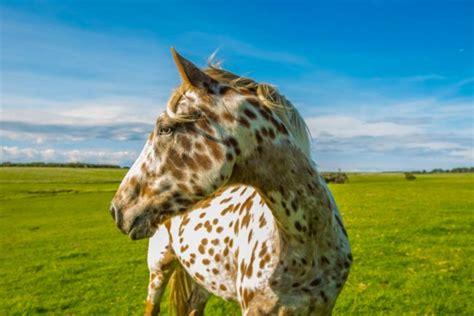 imagenes sorprendentes reales o falsas 13 razas de caballos que parecen falsas pero son 100