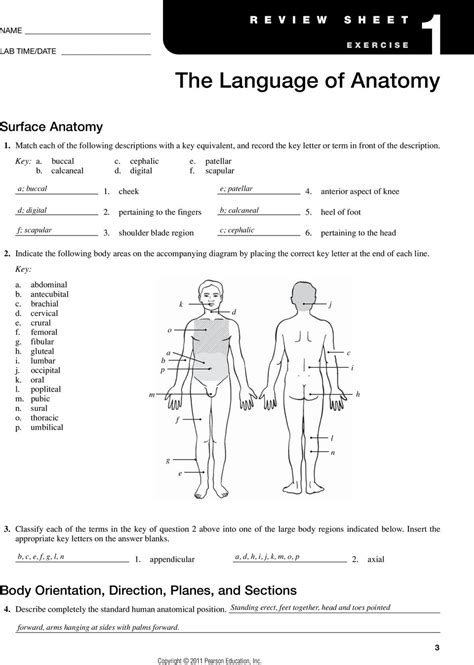 anatomy and physiology coloring workbook answers page 41 free worksheet anatomical directions worksheet phinixi