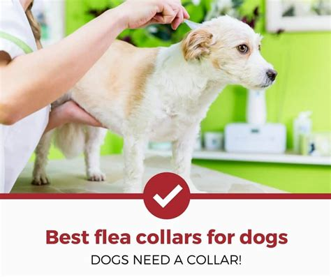 best flea collar for dogs top 5 best flea collars for dogs 2018 complete guide