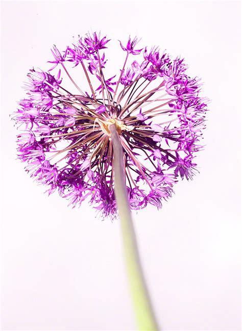imagenes de flores otoñales flores im 225 genes y fotos
