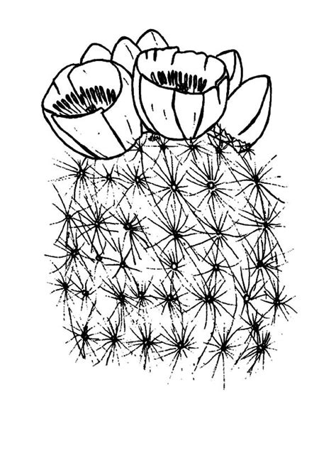 cactus flower coloring page blooming cactus flower coloring pages best place to color