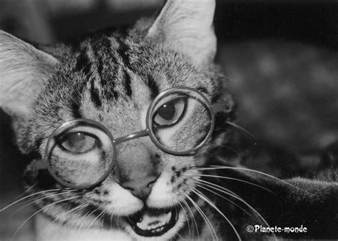 wallpaper hd chat lunette chat avec des lunettes collection 13 wallpapers