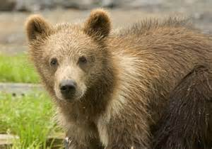 California Stats A To Z The Usa California State Mammal