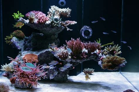 Marine Aquascaping Techniques by Tips For Awesome Aquascapes Saltwater Aquarium Advice