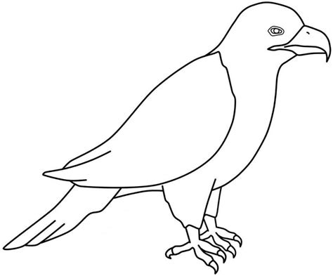 catfish coloring page az coloring pages
