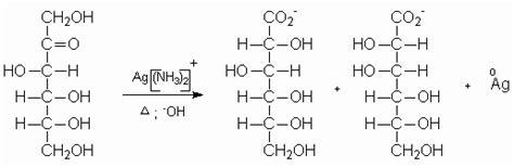 lipidos cadenas abiertas carbohidratos monografias