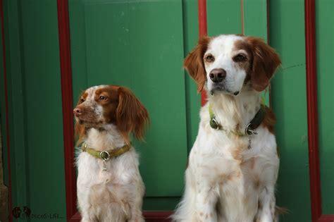 werkstatt hund hundeblog fressen kuscheln buddeln die filzleinen