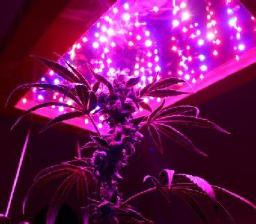 growing marijuana  led lights led grow lights judge